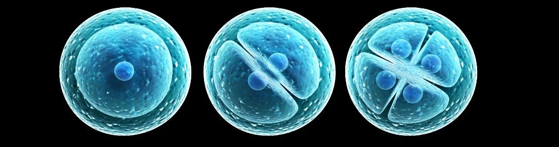 Un análisis de sangre permitirá predecir la calidad de óvulos