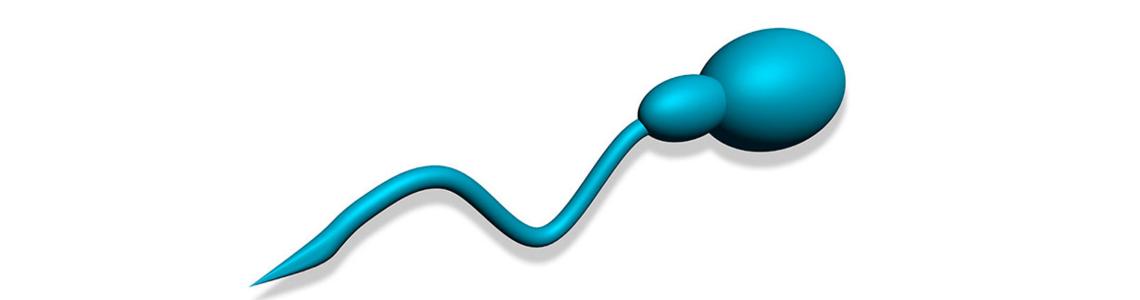 Mejora la obtención espermatozoides en hombres con azoospermia