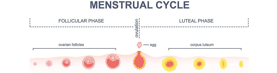 Conocer tu cuerpo para estimular tu fertilidad