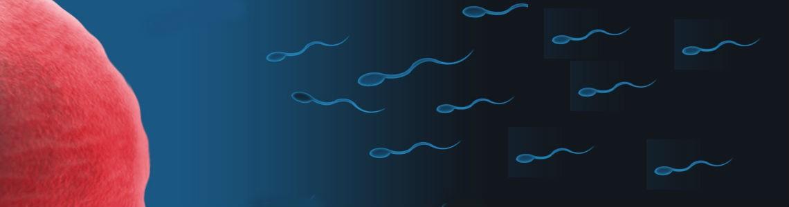 ¿Cómo afecta la quimioterapia a la fertilidad?